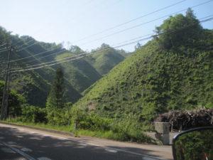 銅ヶ峠の緑