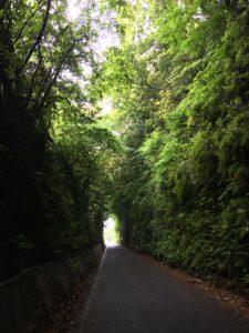 野母崎までの道